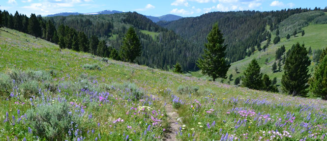 Hiking in Southwest Montana